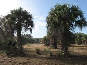 4+ Acres in Southwest Florida --> build your Country Estate !