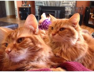 Two very sweet cats looking for new home