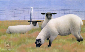 Limited Edition Signed Print / Three Sheep by Alex Colville