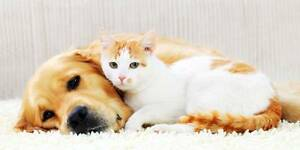 HOUSE VISITS FOR PETS Nerang Gold Coast West Preview