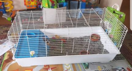 Guinea Pigs (x2) and cage