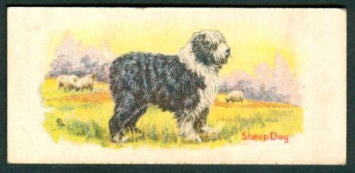 1930 SHEEP DOG  Card COWANS Chocolate V13 Cowan cocoa Canadian SHEEPDOG