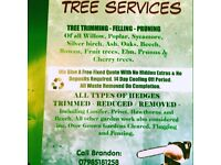 Cutting edge tree, landscaping and jet washing