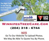 ★ ★ ★ NEED.TREE.REMOVAL or PRUNING.SERVICE *204* 318.6744