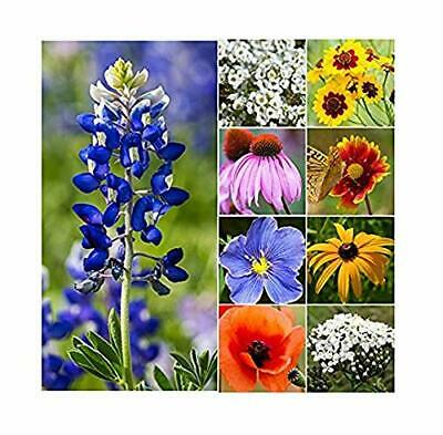 30,000 Seeds of Texas & Oklahoma Wildflower Seed Mix - Native Annuals