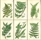 Fern Botanical Prints