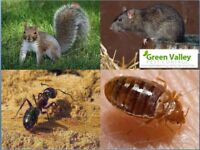Pest control service in Vancouver within your budget
