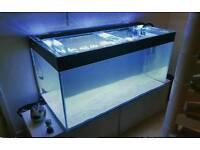 4x2x2 Full 450litre Aquarium Setup