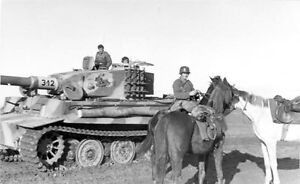 WWII Photo German Tiger Tank Cavalry Horses  WW2 / 4023