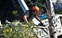 TREE REMOVAL/PRUNE/ISA! STOP SEARCHING! CALL US NOW!!!!!!!!!!!!!