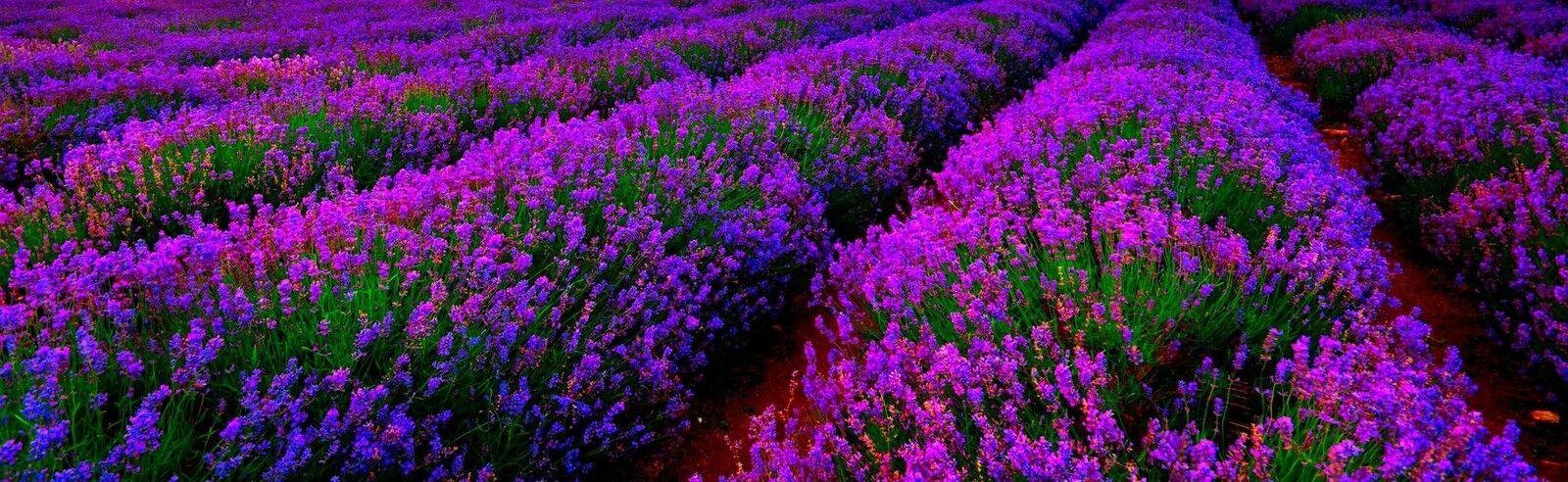Lavender Farm ~