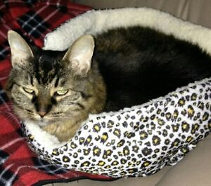 Our baby is still lost: Small older brown/black female tabby