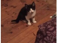 10 week old kitten looking for a home