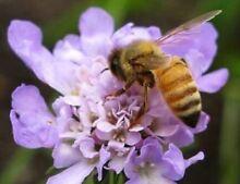 Bees relocation service (All Perth Areas)duty of care Perth CBD Perth City Preview