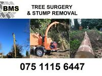 Tree Surgeons Tree Surgery Stump Grinding and Removal Landscapers Pavers Gardeners