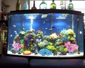 45 gallon Fish Tank and fish