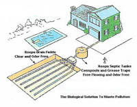 1 year Biologic Treatment for your plumbing and septic field