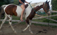 Amazing 5 yr old mare for sale