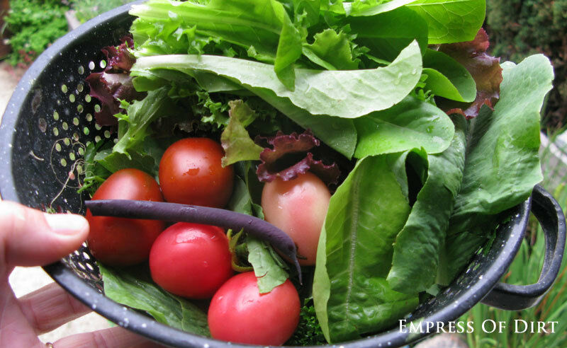 Fresh veggies from the garden