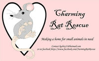 Charming Rat Rescue Adoptions