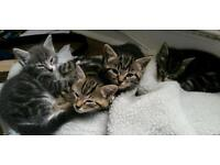 4 stunning little kittens