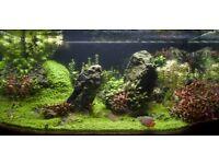high quality custom made aquarium for sale