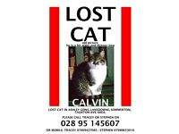 Lost Cat -NOW FOUND!!