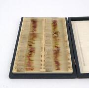 Vintage Microscope Slides