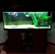Juwel Rio Fish Tank