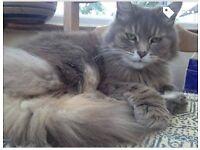 Missing female cat Stourport Area