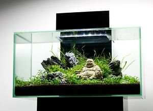 looking for tank decor