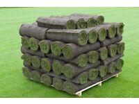1m2 of lawn turf