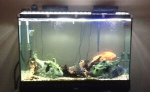 Aquarium 110 Gallon Tall
