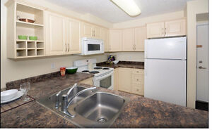 Two Bedroom Newly Renovated - Freshly Painted Condo Apt for Rent