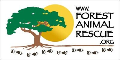 Forest Animal Rescue