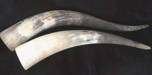 Vintage STEER HORNS -