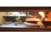 2 lizard tanks 4ft & 2