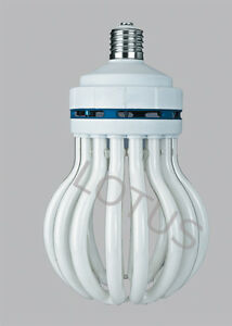 The Lotus Is Here Best Cfl Grow Bulb You Can Buy 6500k More Light Than 250w 8u