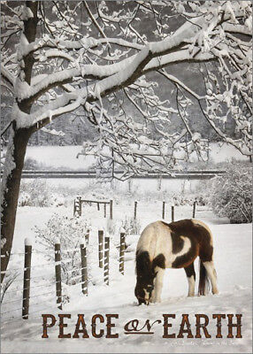 Brown and White Horse in Snow Lori Deiter Box of 18 Country Christmas Cards ()
