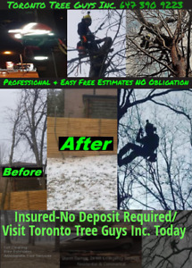 Affordable Tree Service - Tree Removal/Pruning (647) 390 - 9223