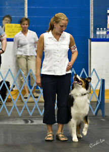 Manners Dog Training Class
