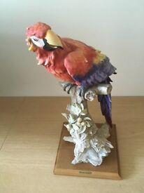 Giuesspe Armani Capodimonte parrot