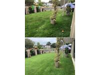 Hedge trimming - Grass cutting - Gardening services - Tidy up - Lawn mowing -Fencing