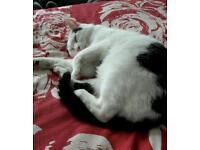 9 y/o female cat needs loving home
