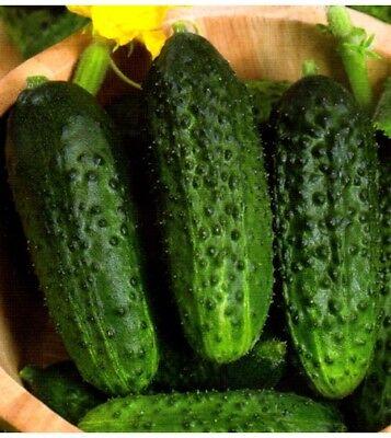 Cucumber Bushy cornichon Seeds cucumbers organic non gmo Ukraine 1g Farmer idea (Cucumber Ideas)