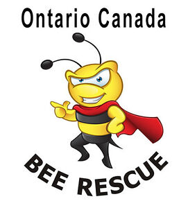BEES! Bee swarm removal and Bee nest extraction - London London Ontario image 9