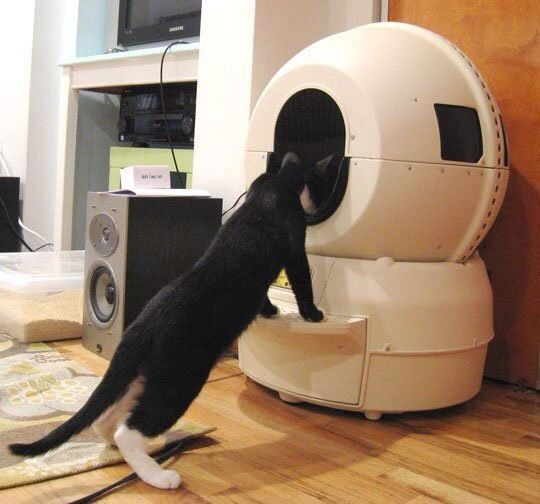 the litterrobot automatic litter box is highly rated among automatic litter boxes the enclosed globe gives the cat some privacy