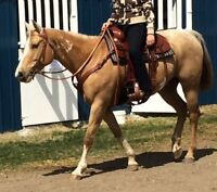 For Sale: Registered Paint Horse-Mare