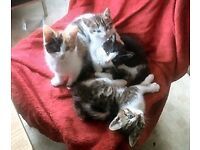 Kittens. Gorgeous wee bundles of love. All colours. Loving homes only please. Fyvie area