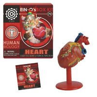 Heart kit EIN-O's .. NEW .. study the Heart's Form & Function